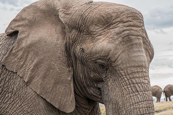 skin-like-elephant